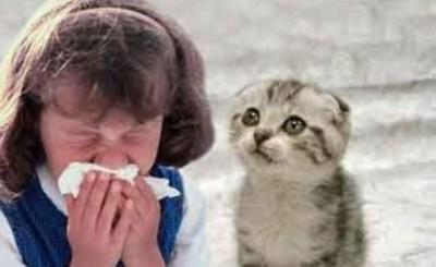 Появление аллергической реакции у людей не зависит от длины шерсти животного