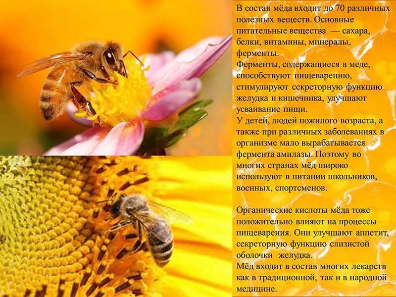 Аллергия на мед – миф или реальность?