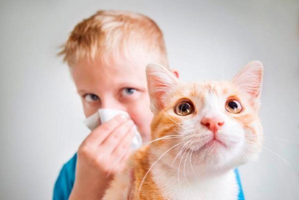 Аллергия на кошек как проявляется