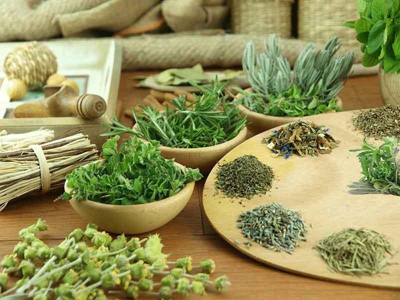 Травы от аллергии, особенности лечения