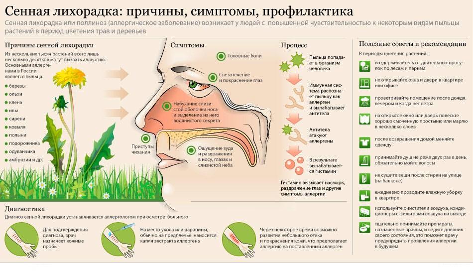 Аллергический ринит: симптомы и лечение сезонного и круглогодичного насморка