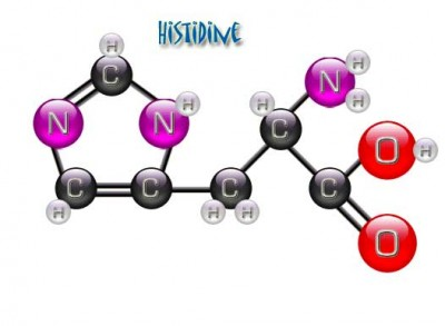 Гистамин и его влияние на организм