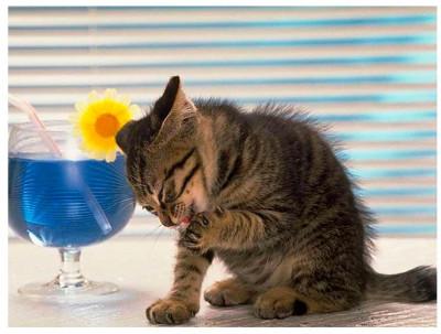Кошка моется