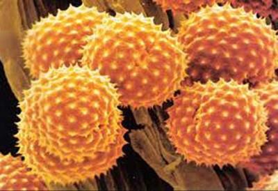 Компоненты пыльцы
