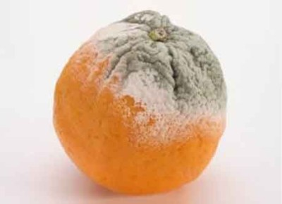 Плесень на лимоне