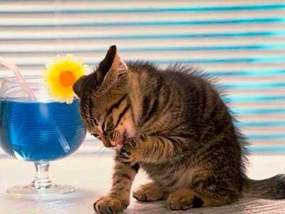 Белок протеин у кошек