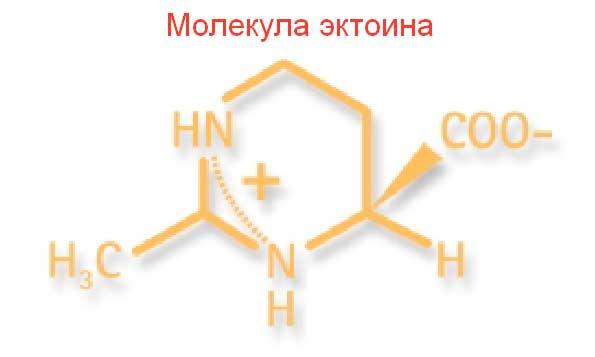 Эктоин